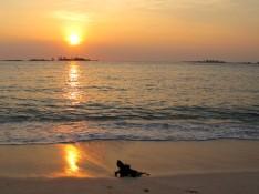 bahamas, abaco, green turtle cay, new plymouth, gillam bay