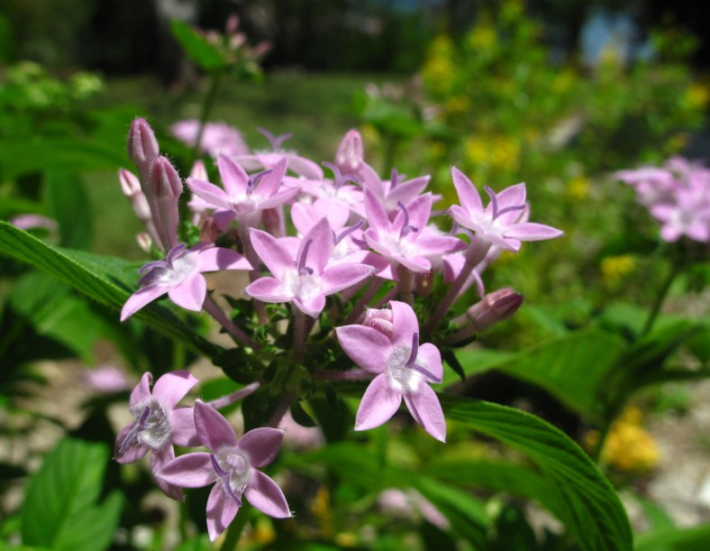 Unidentified Purple Flowers