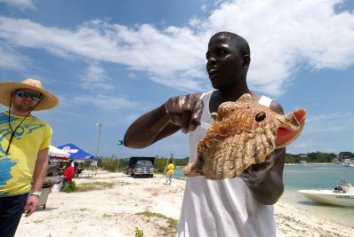 Breaking Conchs (Photo by Tom Walters)
