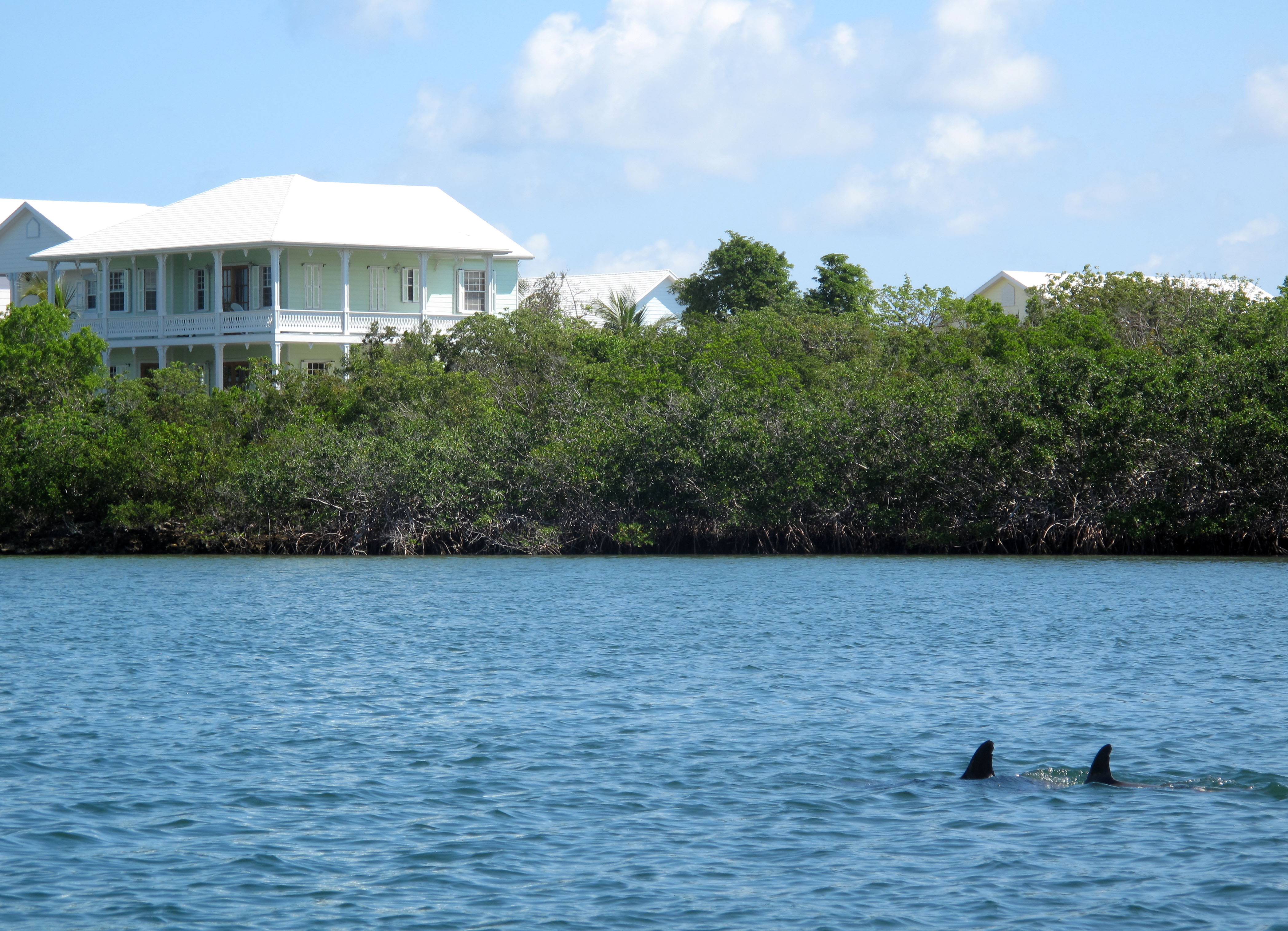Dolphins in Black Sound, Green Turtle Cay, Bahamas
