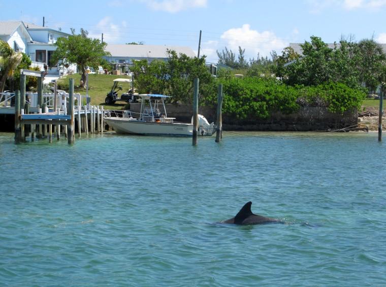 Dolphin in Black Sound