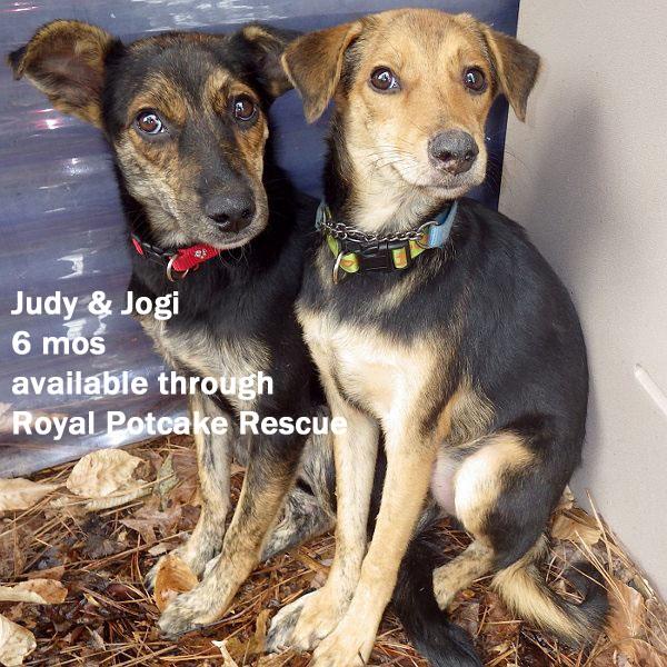 Judy and Jogi