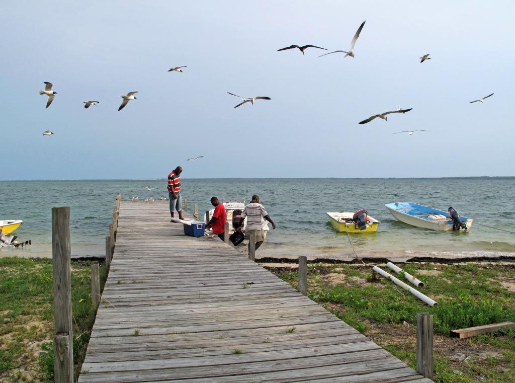 fish, bahamas, abaco, green turtle cay, boats