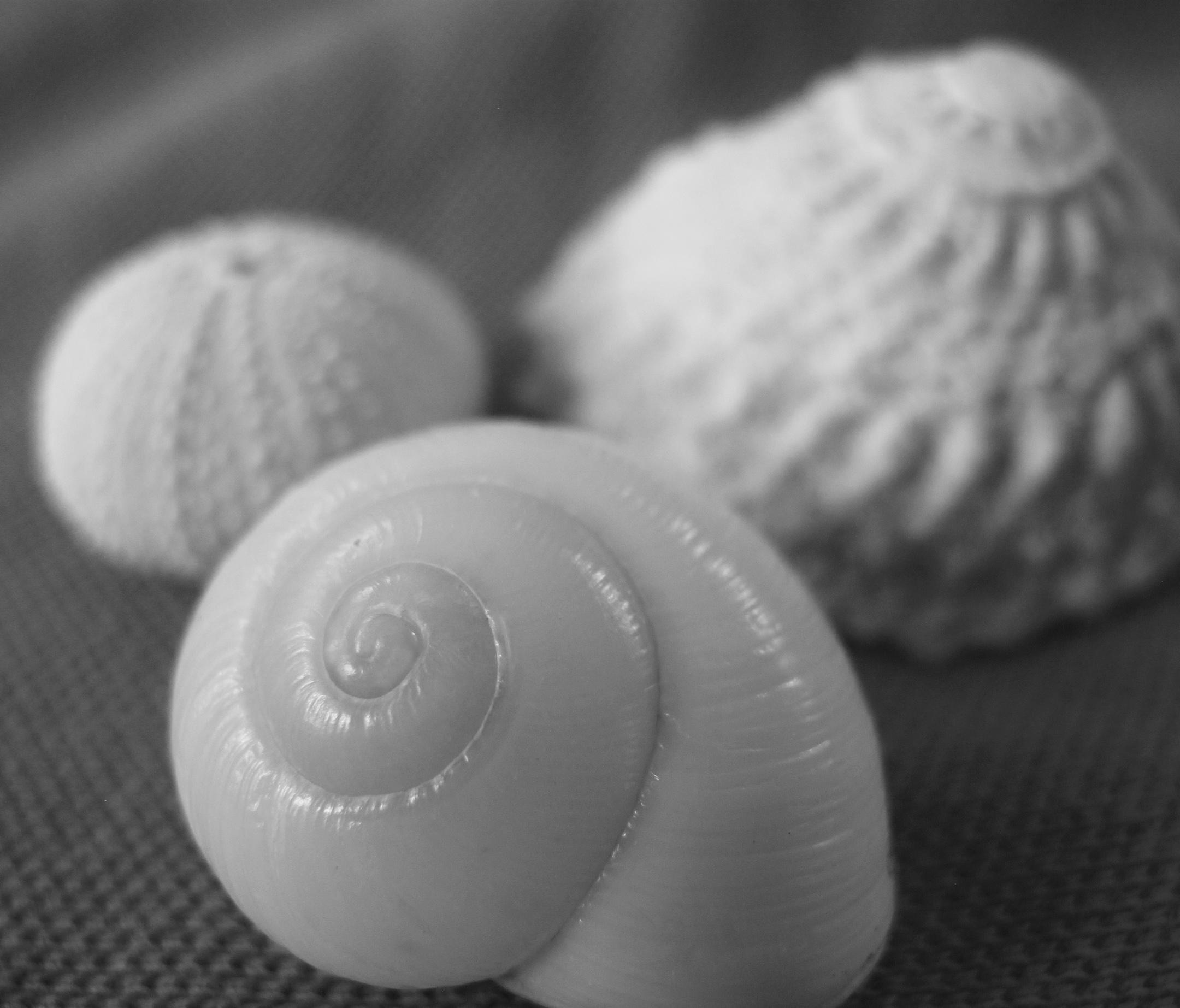 seashells, bahamas, abaco, green turtle cay
