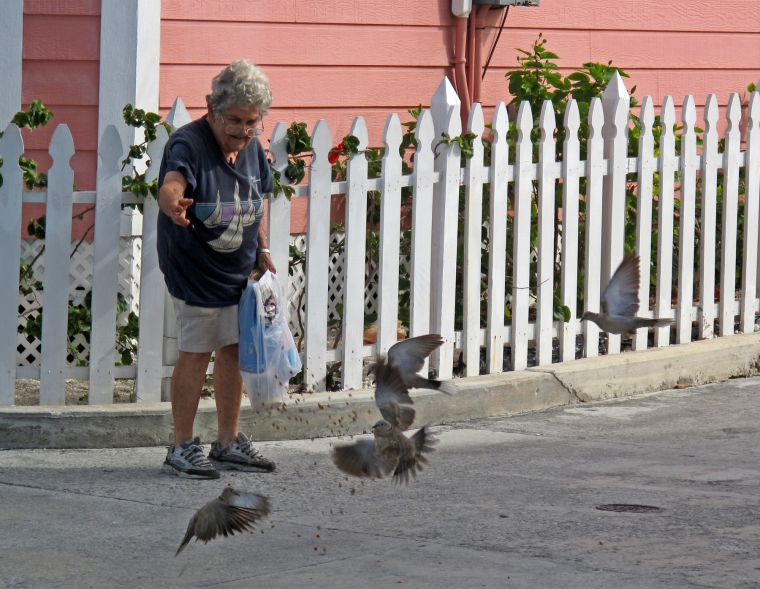Green Turtle Cay, Abaco, Bahamas, Shirley Roberts, Pigeons