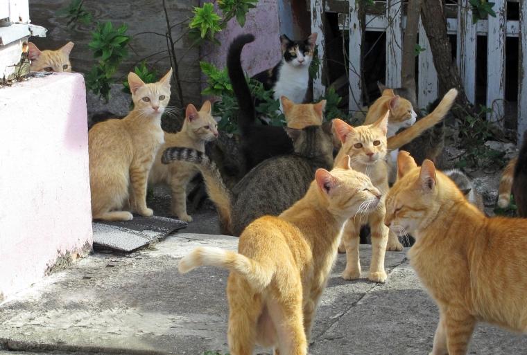 bahamas, abaco, green turtle cay, cats, strays, animals, travel, travel photography