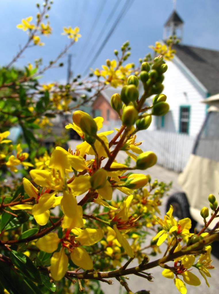 abaco, bahamas, green turtle cay, flower