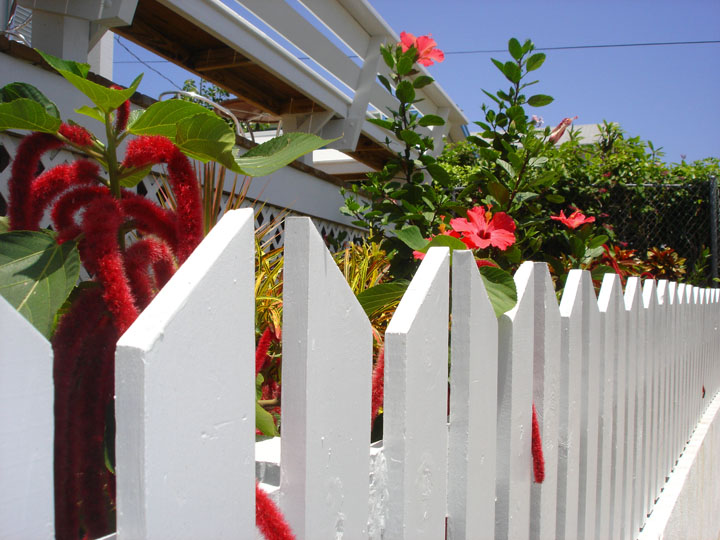 bahamas, green turtle cay, abaco, hope town, tropical flowers