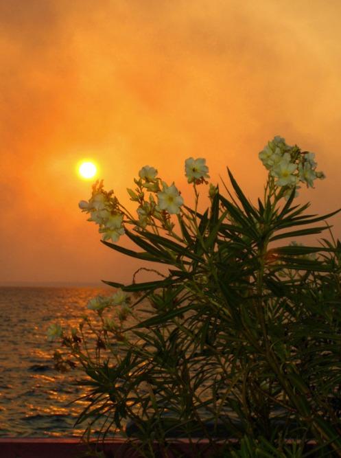 bahamas, abaco, green turtle cay, sunset, oleander