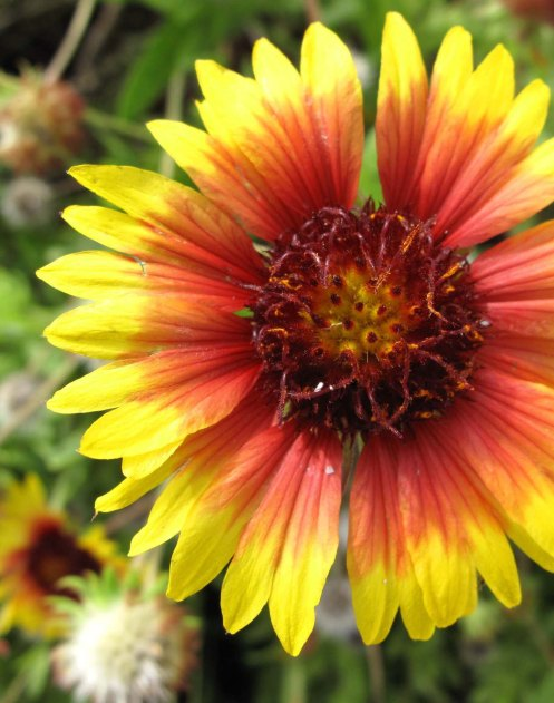 bahamas, green turtle cay, abaco, tropical flower