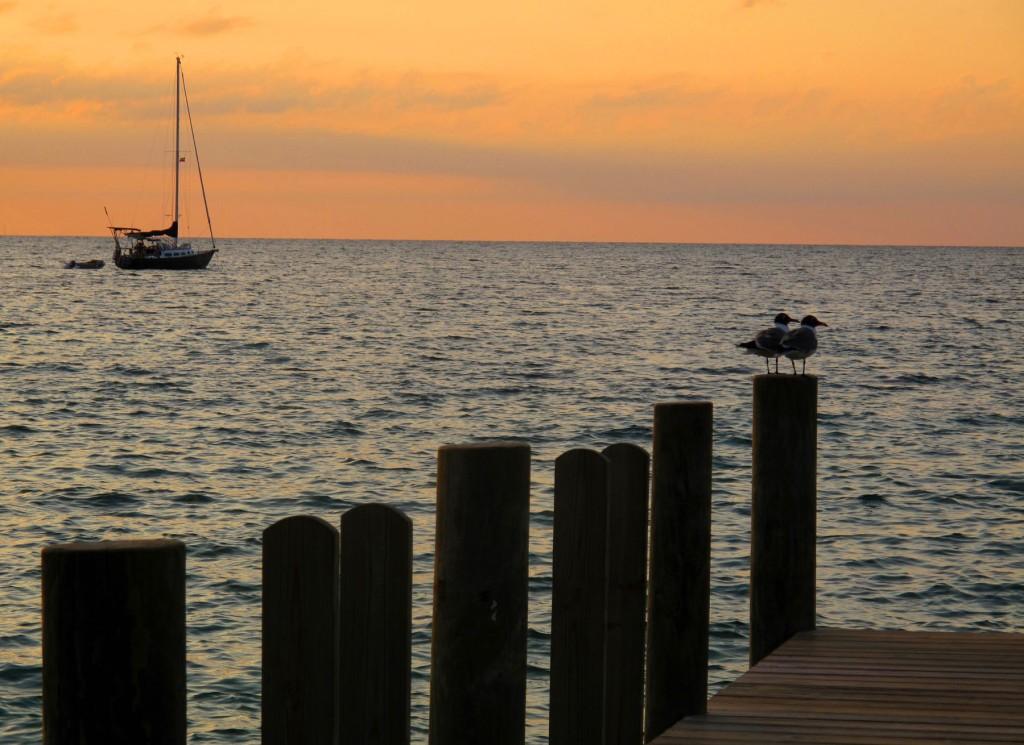 bahamas, abaco, green turtle cay, sunset, seagull