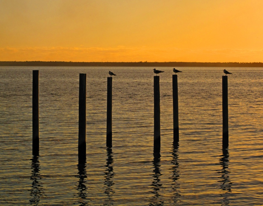 bahamas, abaco, green turtle cay, new plymouth, sunset, seagull