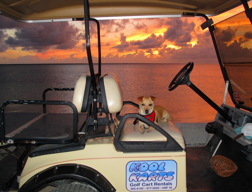 bahamas, abaco, green turtle cay, travel, pet, kool karts
