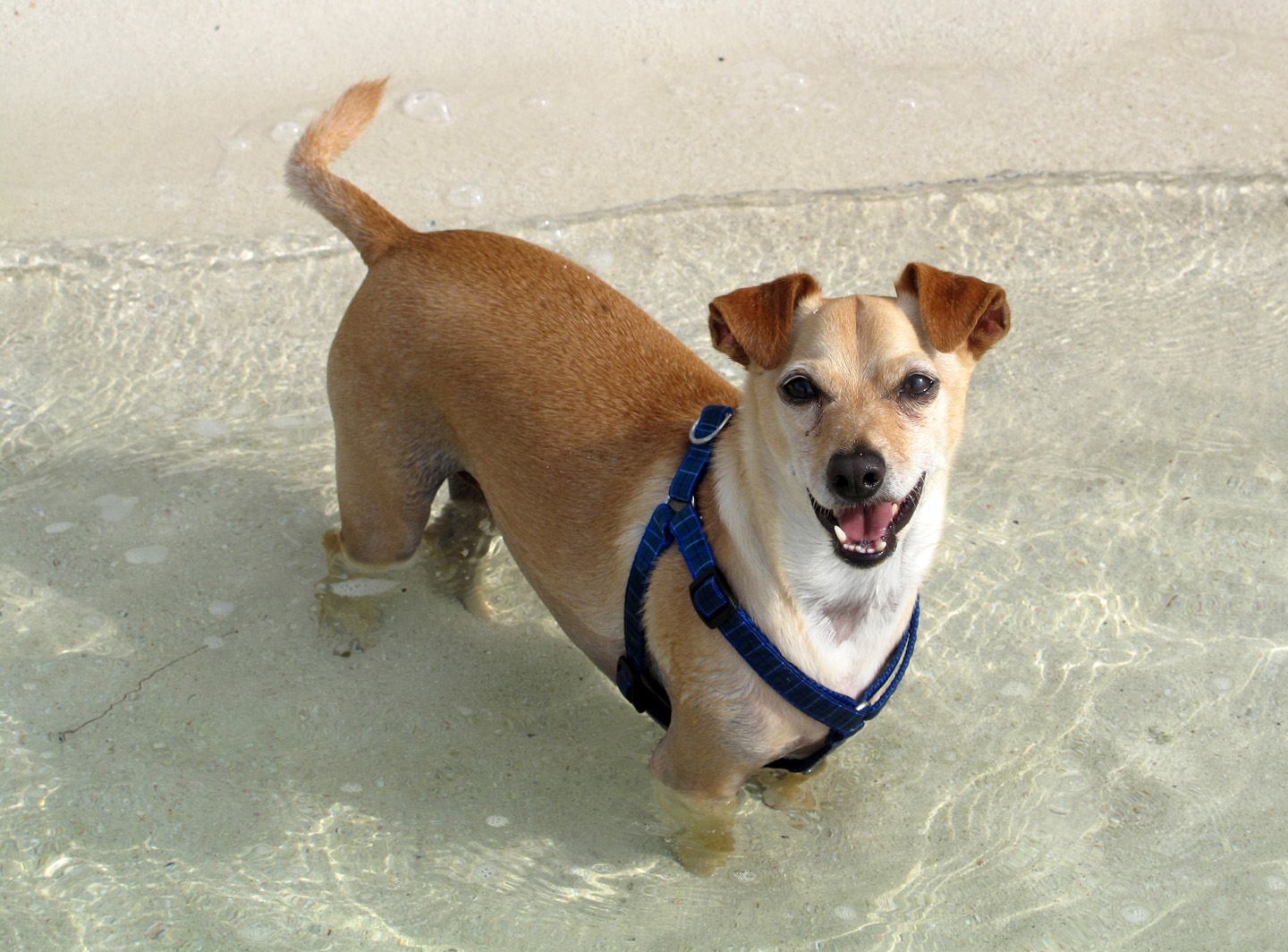 bahamas, dog, abaco, green turtle cay, coco bay, travel with dog
