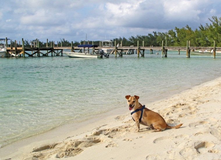 bahamas, abaco, green turtle cay, coco bay, travel with dogs, distemper, regulations