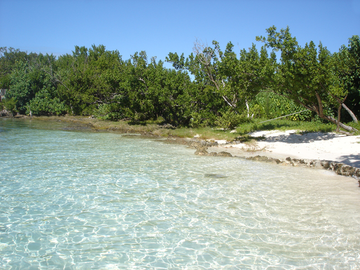bahamas, abaco, green turtle cay, beach, pineapples