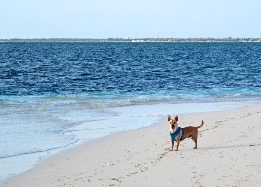 bahamas, abaco, green turtle cay, wrigley, beach, gillam bay
