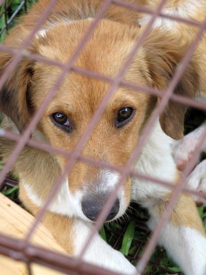 bahamas, abaco, potcake, stray dog, dog rescue, spay, neuter, veterinarian