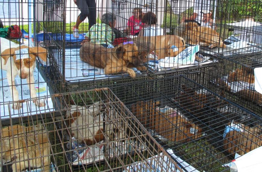 bahamas, abaco, marsh harbour, potcake, stray dog, dog rescue