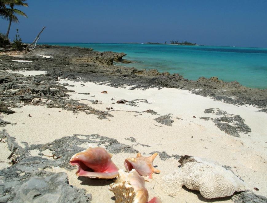 conch shells on gillam