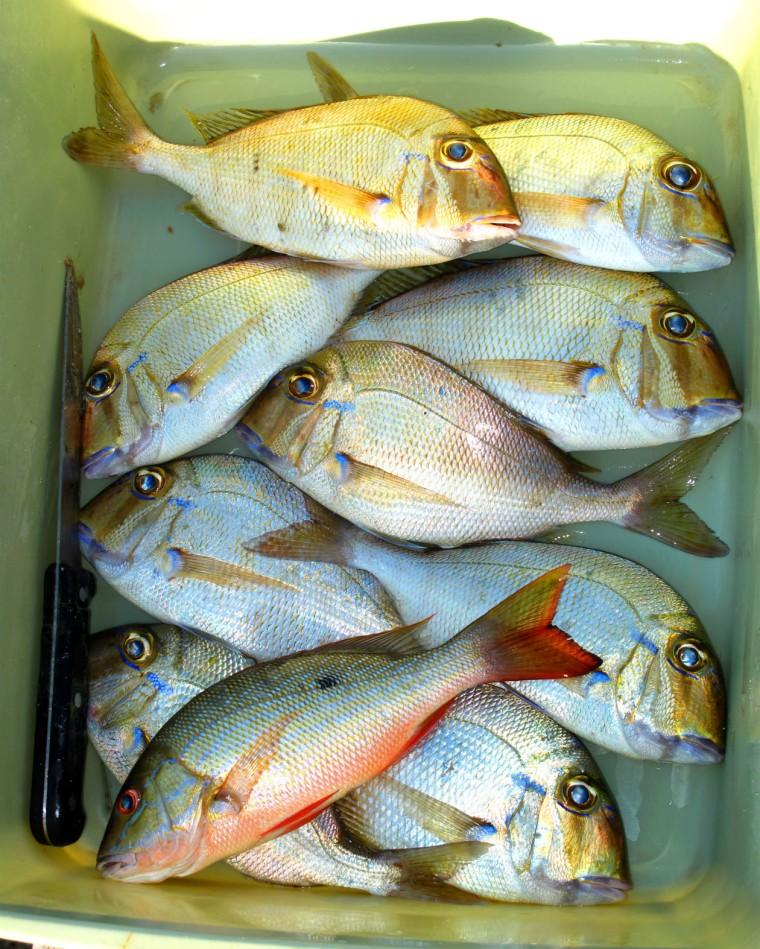 bahamas, abaco, green turtle cay, fishing