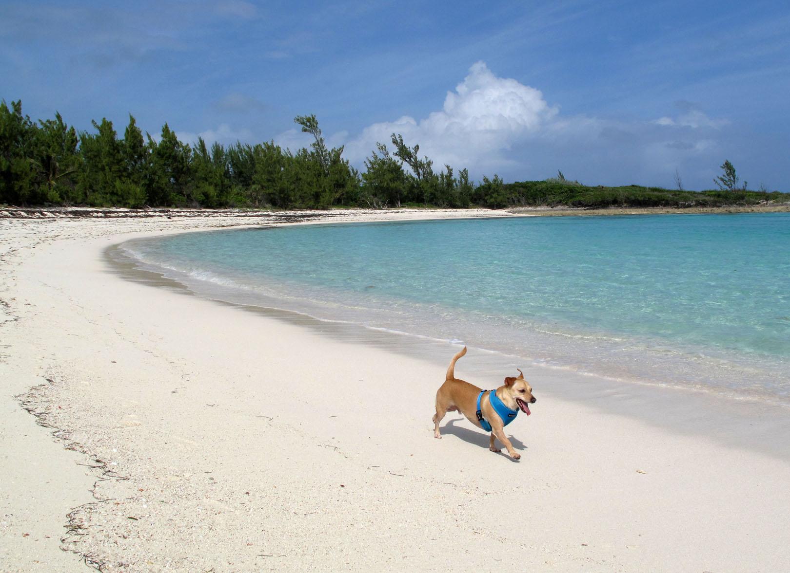 Running on the beach, Bita Bay, Green Turtle Cay, Abaco, Bahamas.