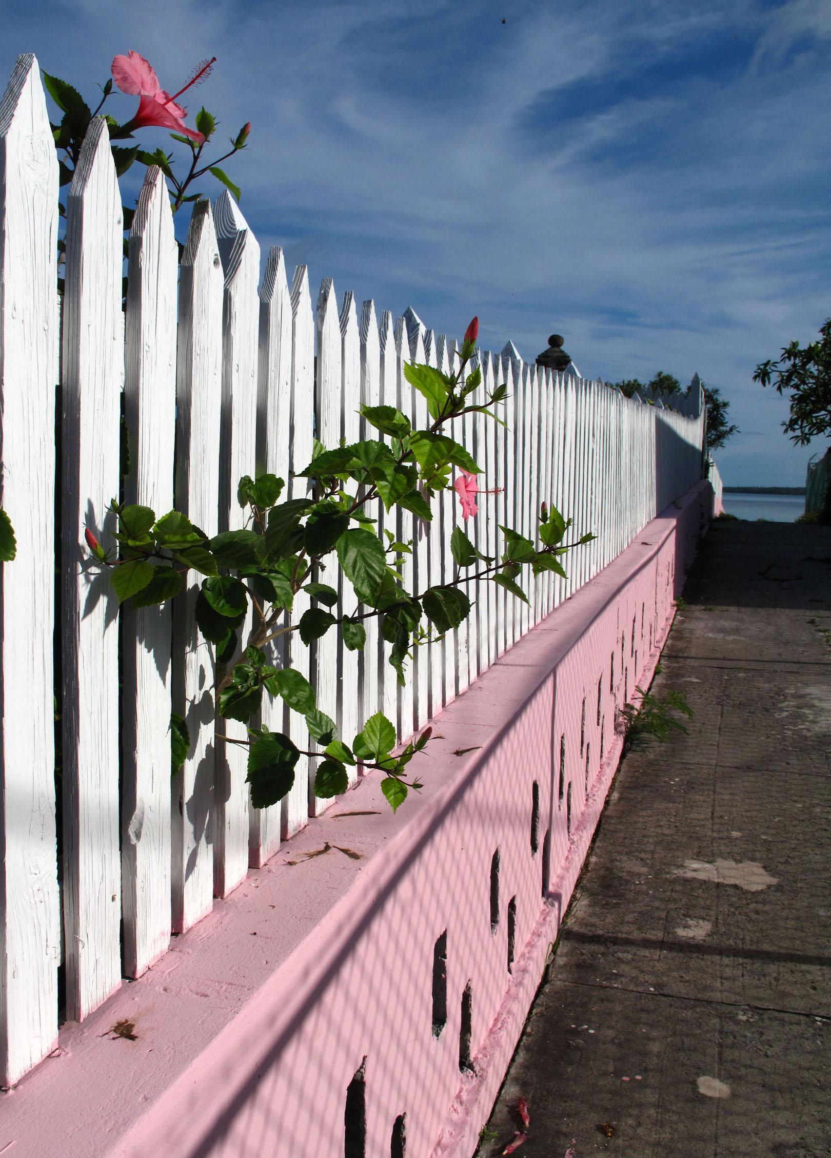 bahamas, abaco, green turtle cay, hibiscus