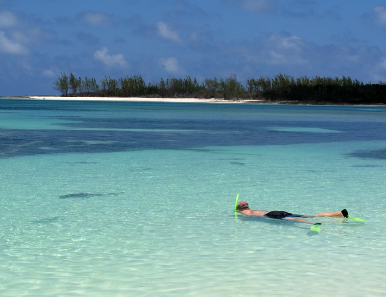 bahamas, abaco, munjack, snorkel, shark