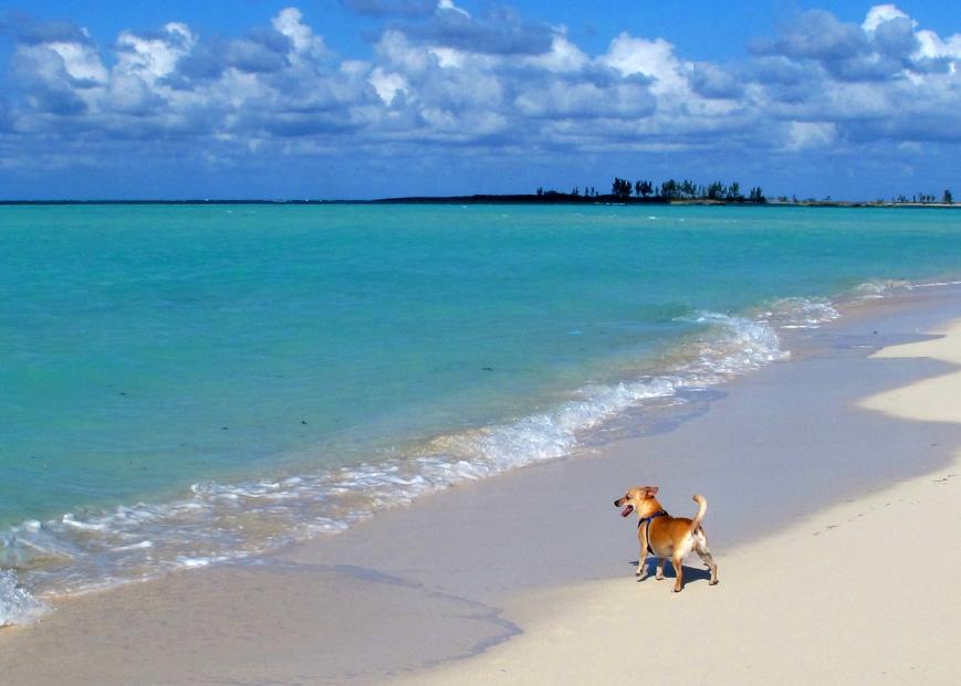 bahamas, abaco, green turtle cay, gillam bay, wrigley, travel with dog