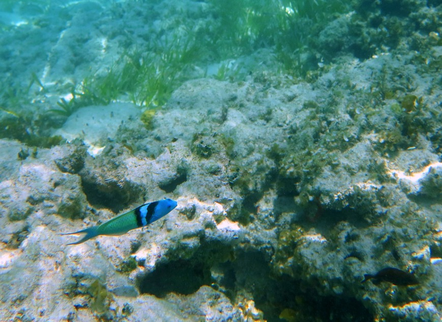 bahamas, abaco, green turtle cay, snorkeling, tropical fish, underwater photography, travel photography