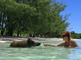 Feeding the Pigs at No Name Cay, Abaco, Bahamas
