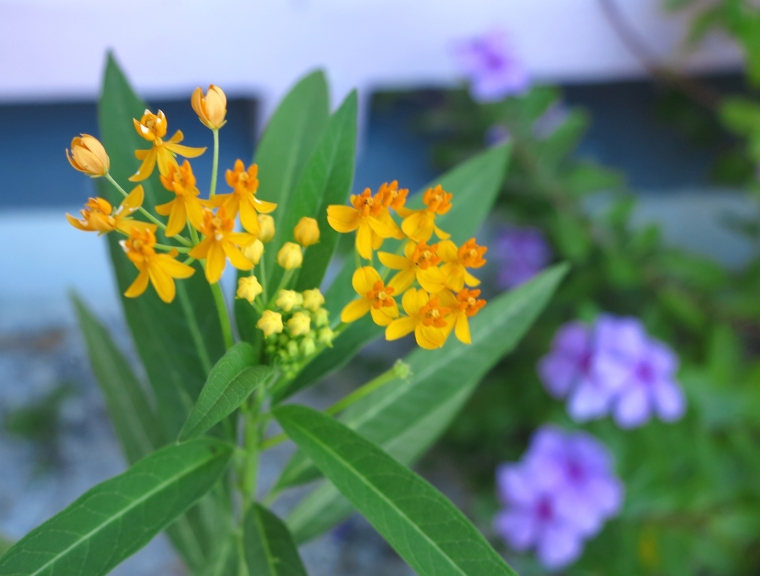 Tropical flowers, Green Turtle Cay
