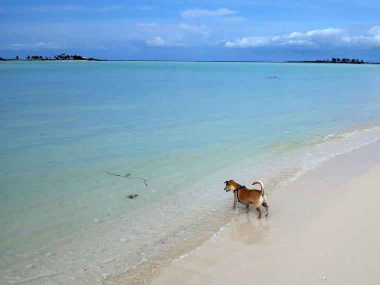 bahamas, abaco, green turtle cay, gillam bay, travel with pet