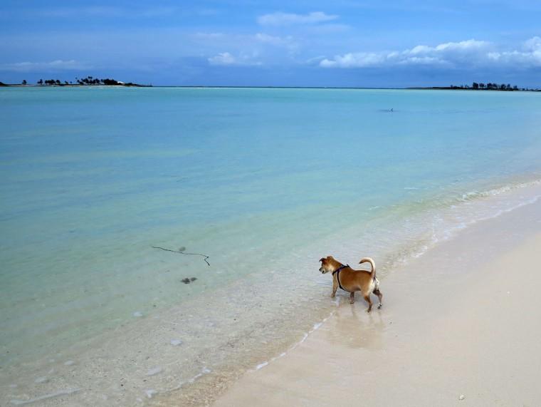 bahamas, abaco, green turtle cay, gillam bay, travel with pet