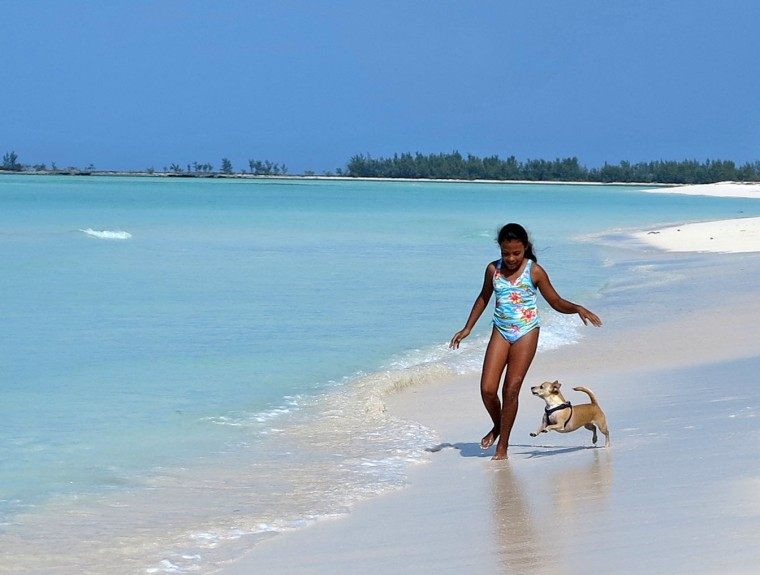 bahamas, abaco, green turtle cay, travel with dog