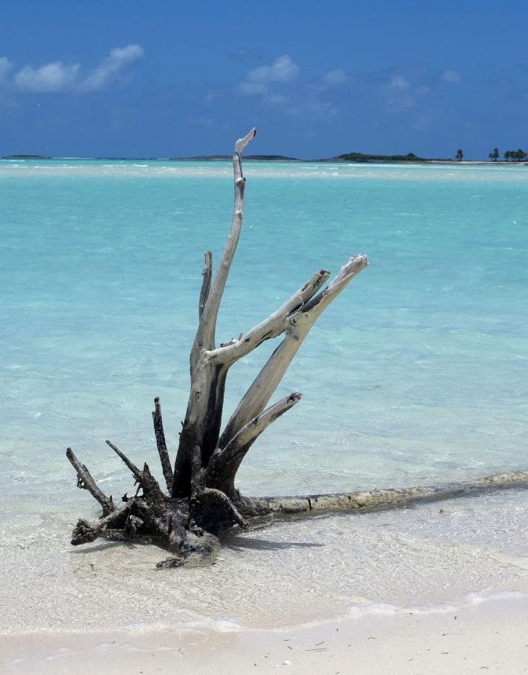 bahamas, abaco, green turtle cay, gillam bay, driftwood