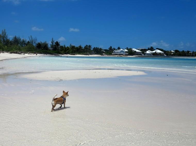 Wrigley explores the shallows at Gillam Bay, Abaco, Bahamas.