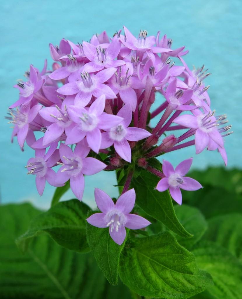 bahamas, abaco, green turtle cay, flowers