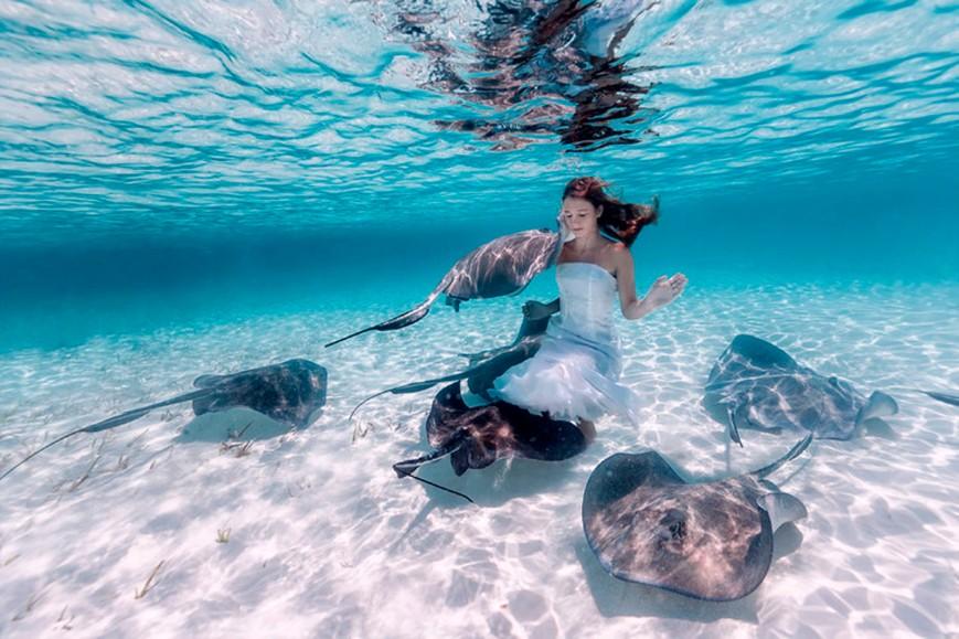 bahamas, sting ray, underwater, photography