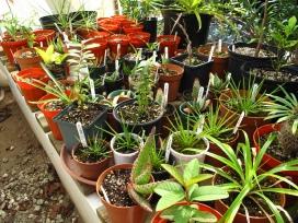 Papillon's plant nursery