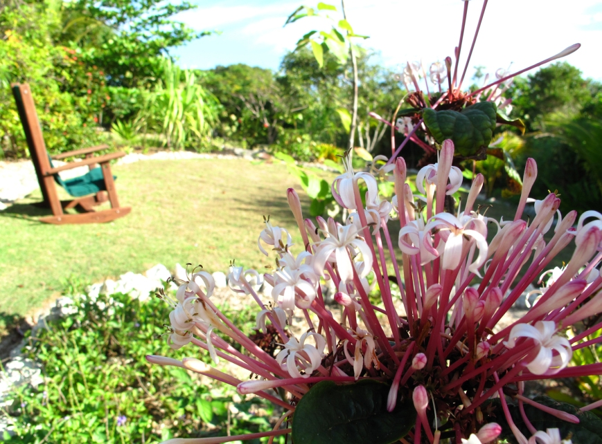 Reduced Garden Pic (3)