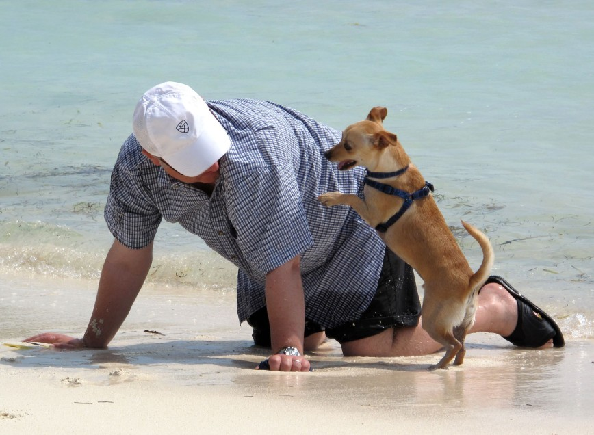 bahamas, abaco, green turtle cay, travel with pet