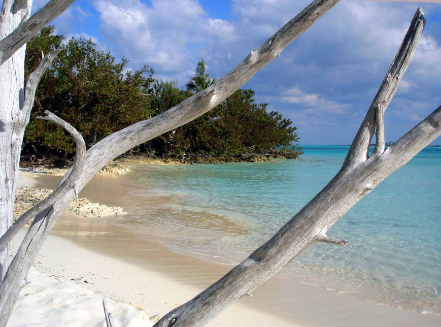 Driftwood at Gillam Bay, Green Turtle Cay, Abaco, Bahamas.