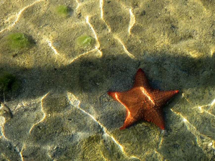 bahamas, abaco, green turtle cay, starfish