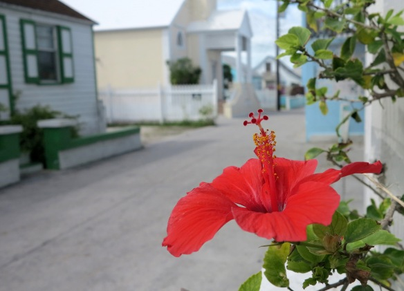 Hibiscus on Parliament Street - Green Turtle Cay, Abaco, Bahamas.