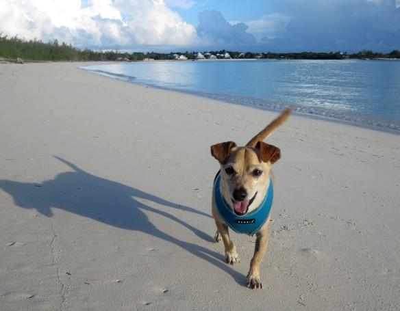 Early morning walk on Gillam Bay - Green Turtle Cay, Bahamas