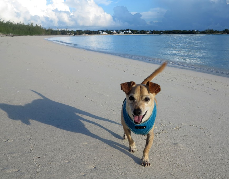 Early morning walk on Gillam Bay - Green Turtle Cay, Bahamas