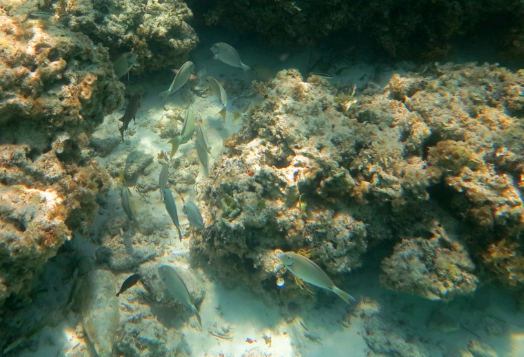 Fish at the Bita Bay Reef