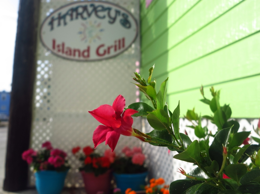 Colourful flowers at Harvey's Island Grill, Green Turtle Cay, Bahamas.
