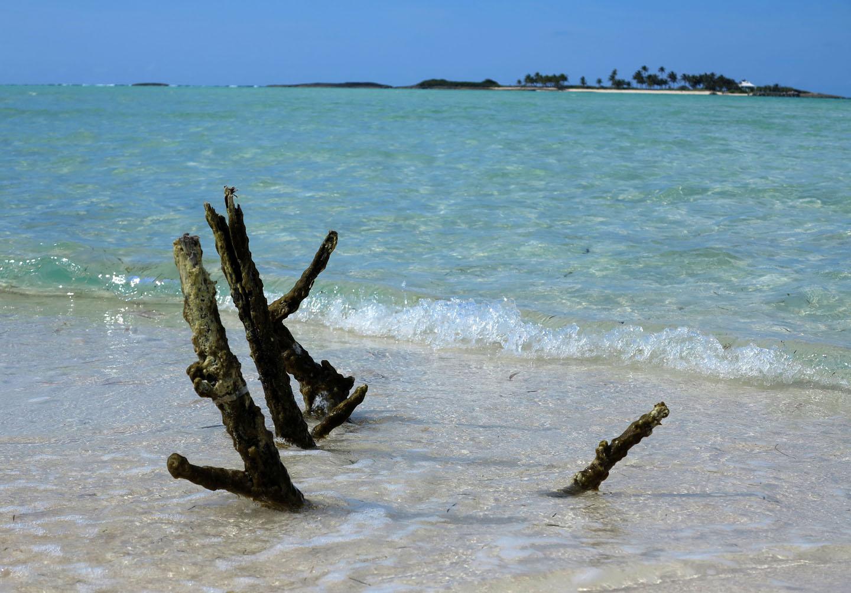 Driftwood at Gillam Bay - Green Turtle Cay, Abaco, Bahamas